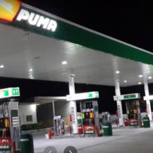 Puma Maria Izabel, San Benito, Petén